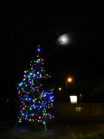 315 Bar & Restaurant: 315 Christmas Tree