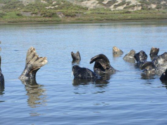 Kayak Connection: Seals posing