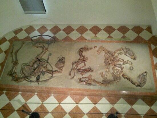 Museo Archeologico Nazionale di Adria : tomba dei cavalli