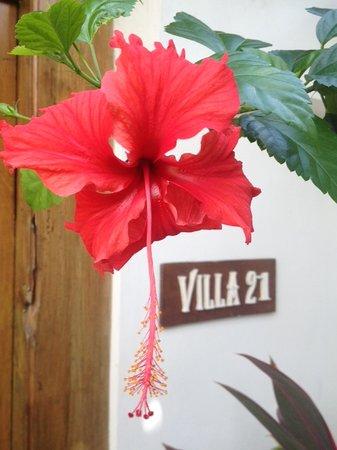 Dyana Villas: villa 21