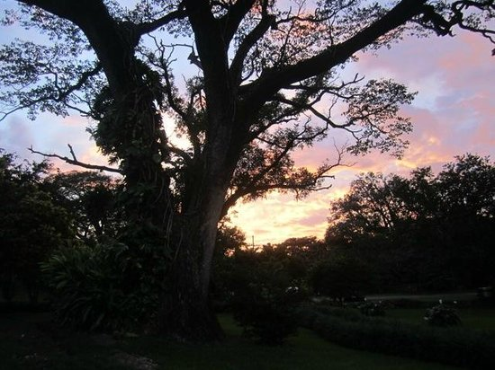 Hacienda Guachipelin: Amazing Tree by the bedrooms