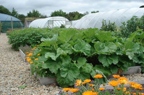 County Leitrim, Irland: Vegetable gardens & poly tunnels