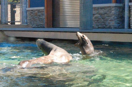 Turtle Back Zoo: sea lions