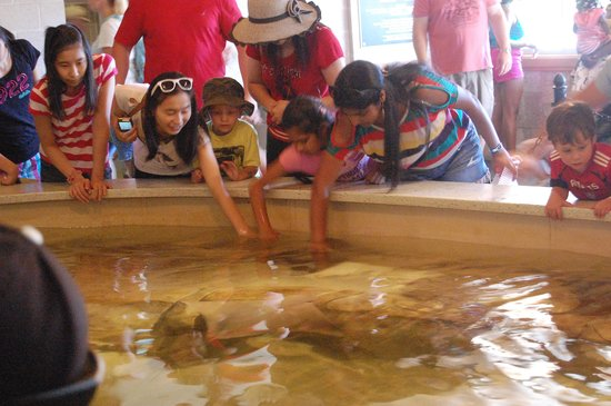 Turtle Back Zoo : touch tank
