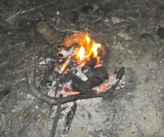 Lync-Haven Rainforest Retreat, Cabins, Camping & Wildlife Experience: The fire that burnt no grass.