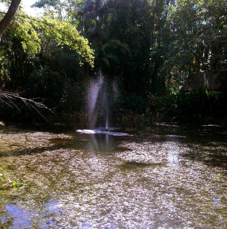 Yandina, Австралия: The lake and garden