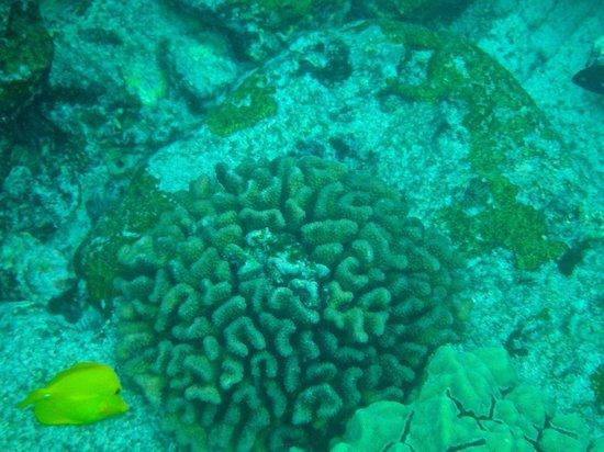 Honaunau Bay: Fish and coral