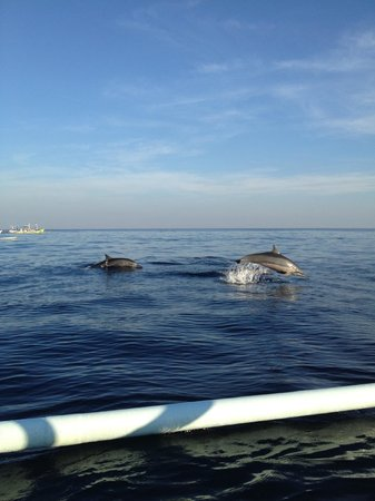 The Damai: Dolphin sighting off Lovina Beach