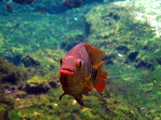 snorkel cenote azul-posando