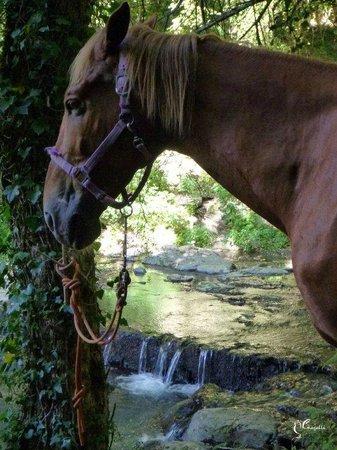 Maneggio Belvedere: Vitozza