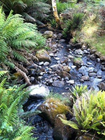 Sassafras Springs: Montos Creek bubbles through the property