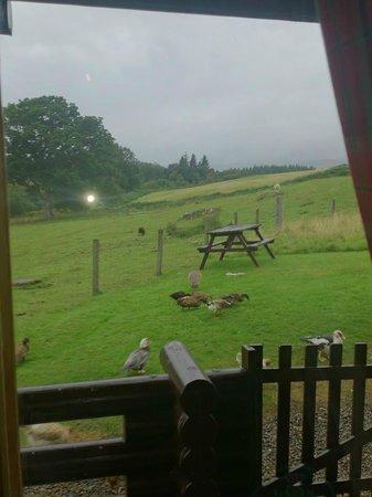 Ardgarry Farm: View from front door