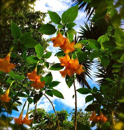 Tacacori EcoLodge: Jardines