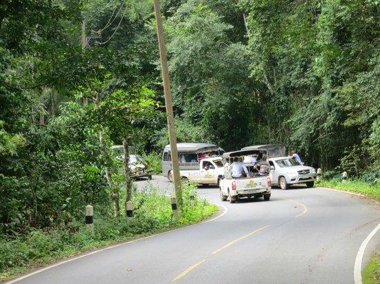 Bobbys Apartment and Jungle Tours: L'embouteillage pour voir les 2 éléphants