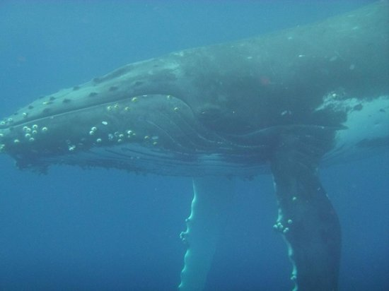 Whales in the Wild: Male Escort
