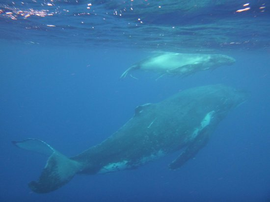 Whales in the Wild: Mother and Calf