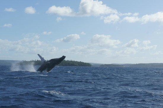 Whales in the Wild : Breeeeach!