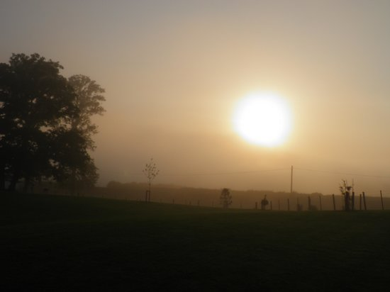 West Longridge Manor: Sunset in the garden.