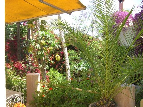 Riad Malika: riad en fleur 1