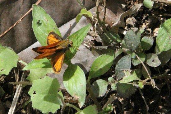 Botanical Gardens: A skipper