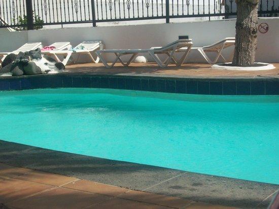 Apartamentos Los Tulipanes: Pool area