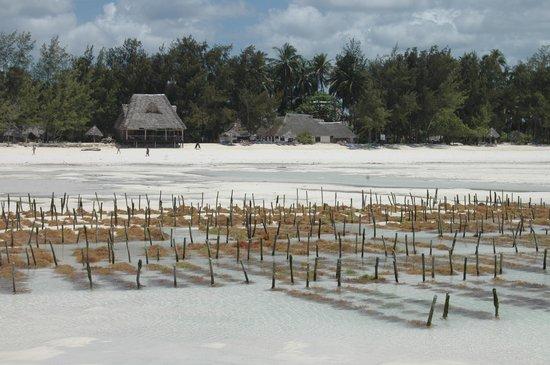 Ndame Beach Lodge Zanzibar: a view from the Ocean