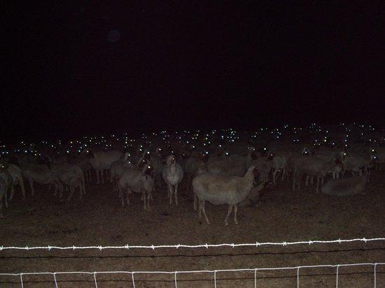 Agriturismo Poggio al vento : può accedere di sera
