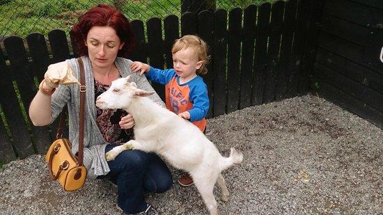 Glendeer Pet Farm: Goats roam freely so you should plan to meet and greet them.