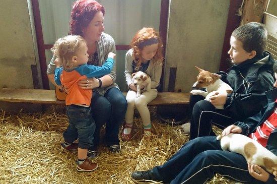 Glendeer Pet Farm: Terrier time.