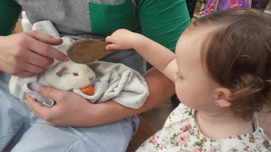 Cefn Mably Farm Park: My daughter with the guinea pig