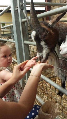 Cefn Mably Farm Park: My daughter and the goat