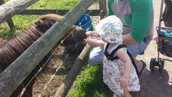 Cefn Mably Farm Park: My daughter feeding the pony