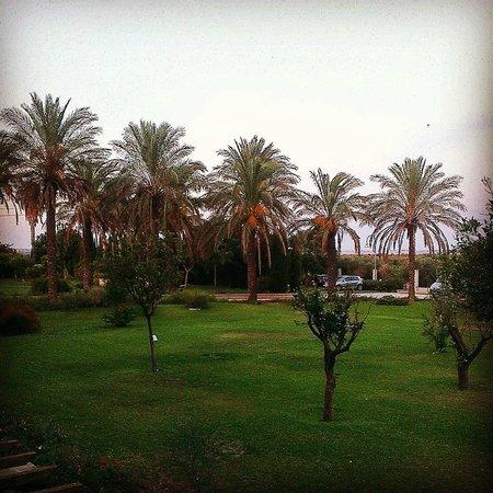Giardino di Costanza Resort : Vue de notre chambre avec les palmiers.Très calme et reposant surtout
