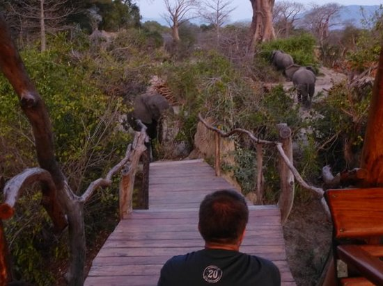 Liwonde Safari Camp: Elephants at platform 1 (dusk)