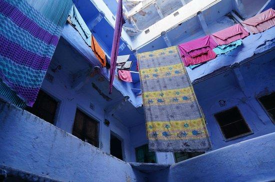 A day with the Kabutar-baaz of Old Delhi - Reviews, Photos
