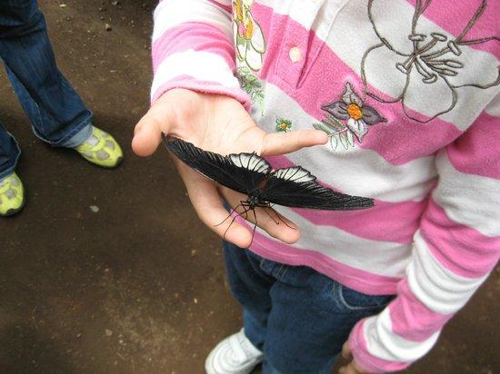 Casa delle Farfalle: In mano a mia figlia