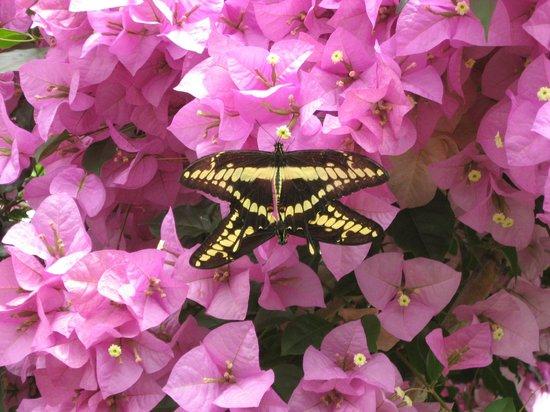 Casa delle Farfalle: Privacy....zero!