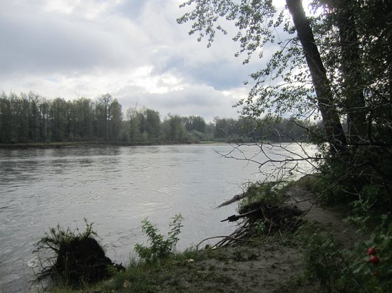 Cottonwood Island Nature Park: river