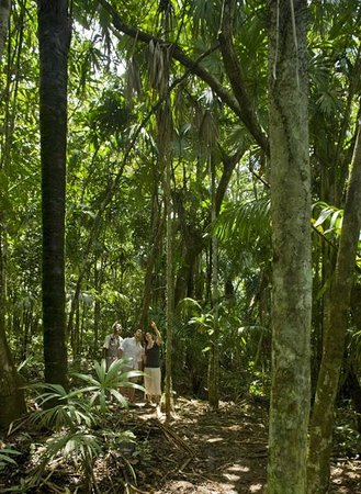 Gamboa Rainforest Resort : Rainforest