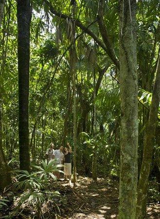 Gamboa Rainforest Resort: Rainforest