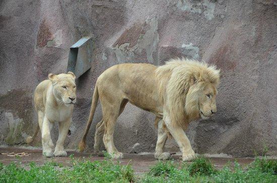 Almaty Zoo: Алматинский зоопарк