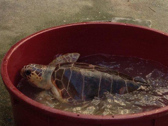 Le vasche foto di ospedale delle tartarughe riccione for Vasche da interrare per tartarughe
