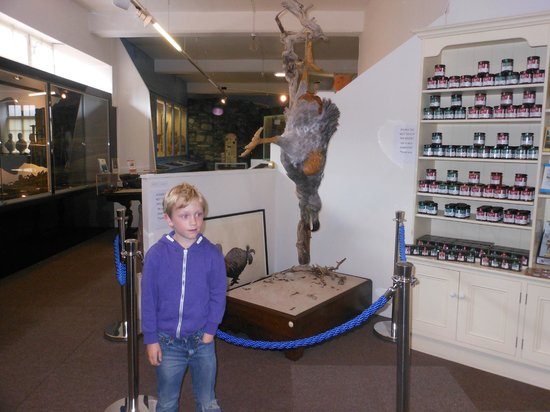 Kendal Museum : Ollie and the Dodo