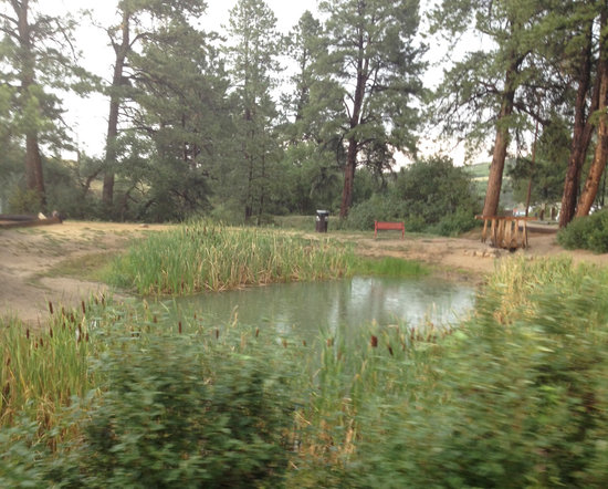 "Yogi Bear's Jellystone Camp-Resort at Larkspur Colorado: Fishing ""pond"""