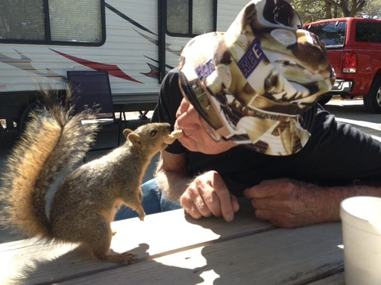 Drifters Resort: We've told the squirrels time and again not to feed the guests!
