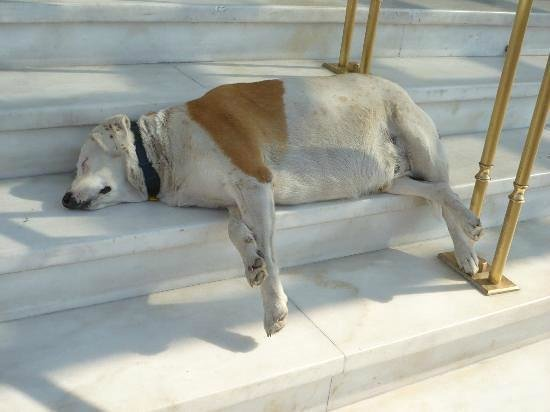 Hotel Grande Bretagne, A Luxury Collection Hotel: The hotel dog who spends the time sleeping on the steps
