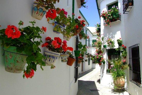 Casa Olea: Priego de Cordoba