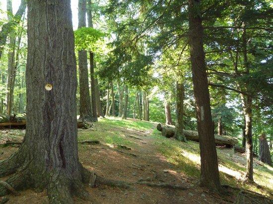 Glimmerglass State Park