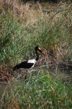 Royal Malewane: Unglaubliche Safari-Eindrücke!