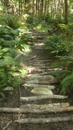 Hollyhock Lifelong Learning Centre: Walking in the woods